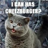 海外ミーム「LOLcats(おもしろ猫)」とは? 元ネタ・初出を解説
